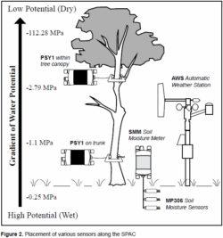 Soil-Plant-Atmosphere Continuum